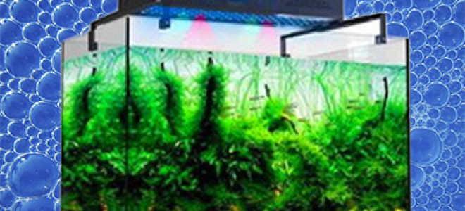 Светодиодные лампы для аквариума: освещение растений и пресноводных жителей